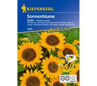 Kiepenkerl Saatgut Sonnenblume 'Sonja'