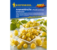 Kiepenkerl Samen Ananaskirsche 'Goldmurmel'
