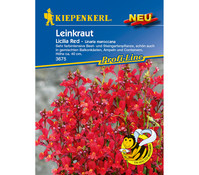 Kiepenkerl Samen Leinkraut 'Licilia Red'