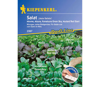 Kiepenkerl Samen Salat 'Asia Salate'
