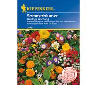 Kiepenkerl Samen Sommerblumen 'Niedrige Mischung'