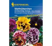 Kiepenkerl Samen Stiefmütterchen 'Orchideenblütige Mischung'