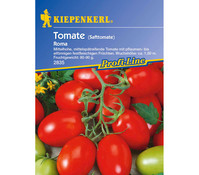 Kiepenkerl Samen Tomate 'Roma'