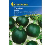 Kiepenkerl Samen Zucchini 'Satelite'