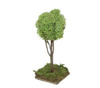 Kolbe Baum, 16 cm