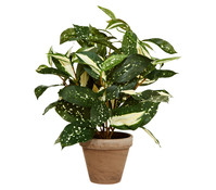 Kunstpflanze Cordyline, 35 cm