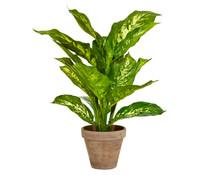 Kunstpflanze Dieffenbachia, 40 cm