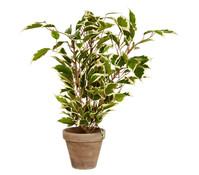 Kunstpflanze Ficus, 40 cm