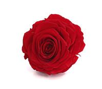 Long-Life-Rose, Ø 9 - 10 cm