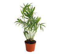 Minipflanzen, grün