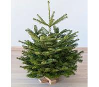 weihnachtsbaum bequem online kaufen dehner dehner garten center. Black Bedroom Furniture Sets. Home Design Ideas