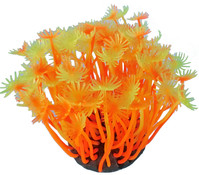 Orbit Smiling Coral, Aquariumdeko, orange