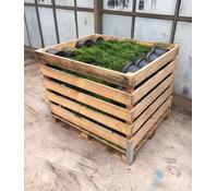 Palette Thuja 'Smaragd' 80 x 5 Liter