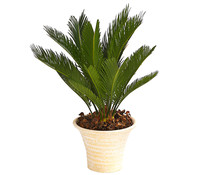 Palmfarn, in Keramik
