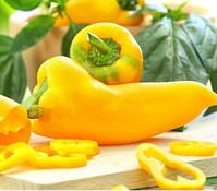 Paprika 'Bullhorn', gelb