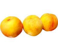 Pfirsich 'Suncrest'