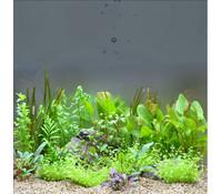 Planet Plants 120er Set Topf & Bund, Aquarium Pflanzen