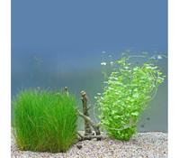Planet Plants 20er Set Netz & Topf, Aquarium Pflanzen