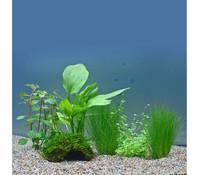 Planet Plants 30er Set Deko & Töpfe, Aquarium Pflanzen