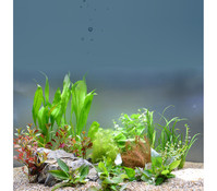 Planet Plants 80er Set Bund, Aquarium Pflanzen