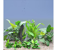 Planet Plants Afrika Set ab 150 Liter, Aquarium Pflanzen
