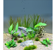 Planet Plants Chichlide 120er Set, Aquarium Pflanzen