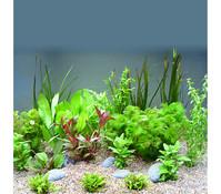 Planet Plants Südamerika 120er Set, Aquarium Pflanzen