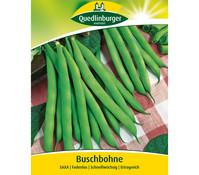 Quedlinburger Samen Buschbohne 'Saxa'