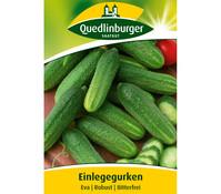 Quedlinburger Samen Einlegegurke 'Eva'