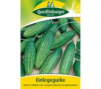 Quedlinburger Samen Einlegegurke 'Libelle'