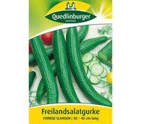 Quedlinburger Samen Freilandsalatgurke 'Chinese Slangen'