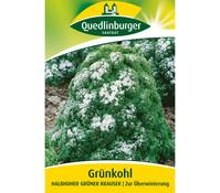 Quedlinburger Samen Grünkohl 'Halbhoher Grüner Krauser'