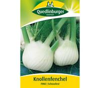 Quedlinburger Samen Knollenfenchel 'Fino'