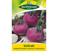 Quedlinburger Samen Kohlrabi 'Delikatess Blauer'