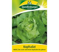 Quedlinburger Samen Kopfsalat 'Muck'