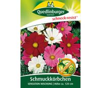 Quedlinburger Samen Schmuckkörbchen 'Sensation Mischung'