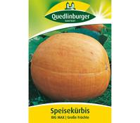 Quedlinburger Samen Speisekürbis 'Big Max'