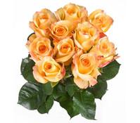 Rose Gelb 10er Bund