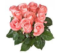 Rose Lachs 10er Bund