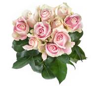 Rose Rosa 10er Bund