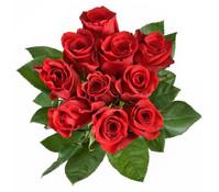 Rose Rot 10er Bund