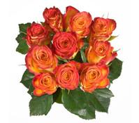 Rose Zweifarbig 10er Bund