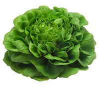 Salat 'Salanova', 12er Schale