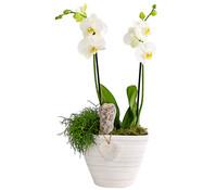 Schmetterlingsorchideen-Arrangement, in Keramik