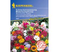 Schneckenresistente Blütensymphonie Mix, Saatgut von Kiepenkerl