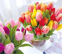 Schnitt-Tulpen, 7 Stück im Bund