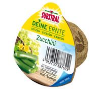 Scotts Substral® Deine Ernte Saatkegel 'Zucchini'