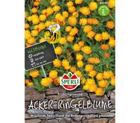 SPERLI Samen Acker-Ringelblume 'Frühlingssonne'