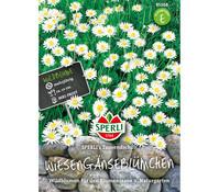SPERLI Samen Wiesengänseblümchen 'SPERLI´s Tausendschön'