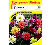 Thompson & Morgan Samen Dahlie 'Starlight Mischung'